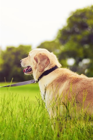 iPhone Wallpaper Little girl and dog, grass