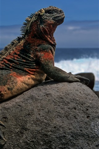 iPhone Wallpaper Lizard, rocks, sea