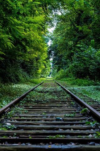 iPhone Wallpaper Railroad, trees, green, channel