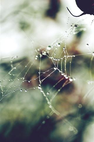iPhone Wallpaper Spider web, dew