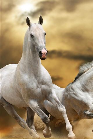 iPhone Wallpaper Three horses running, speed