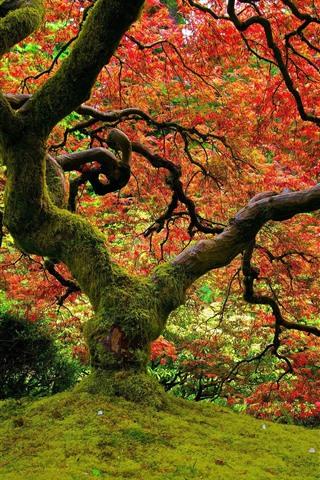 iPhoneの壁紙 木、苔、紅葉、秋