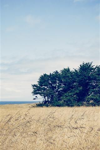iPhone Wallpaper Trees, reeds, sea