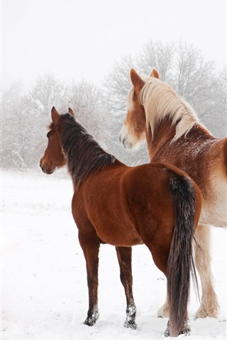 iPhone Wallpaper Two horses in winter, snow, back view
