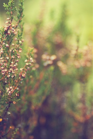 iPhone Wallpaper Wildflowers, grass, hazy background