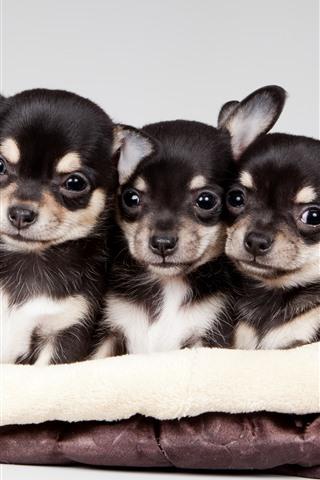 iPhone Wallpaper Cute five puppies