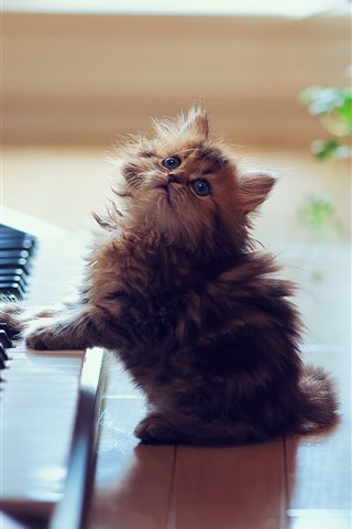 iPhone Wallpaper Cute kitten play piano