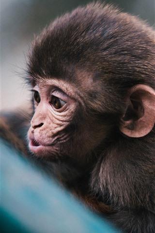 iPhone Wallpaper Cute little monkey, look