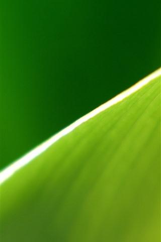 iPhone Wallpaper Green leaf macro photography, half