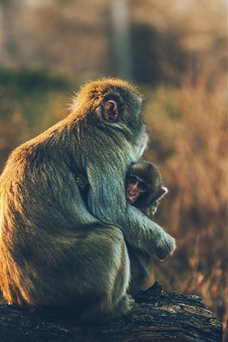 iPhone Wallpaper Monkey and monkey cub
