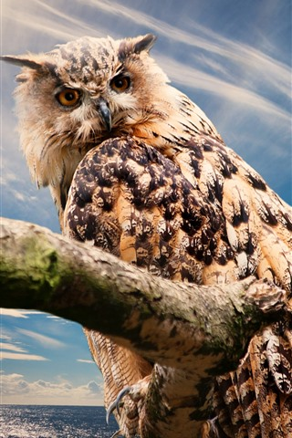 iPhone Wallpaper Owl look back, feathers, blue sky