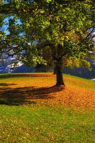 iPhone Wallpaper Trees, mountain, grass, snow, sunshine, shadow