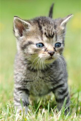 iPhone Wallpaper Two kittens, grass, cute pet