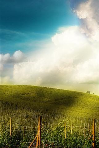 iPhone Wallpaper Vineyard, slope, houses, sunshine