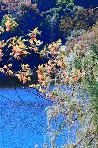 iPhone Wallpaper Colorful maple leaves, trees, river, autumn