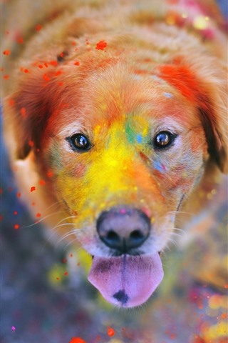 iPhone Wallpaper Dog, face, eyes, colorful paint