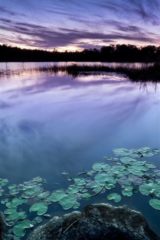 iPhone Wallpaper Dusk, lake, water lily, stones, silhouette