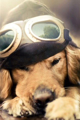 iPhone Wallpaper Funny dog, pilot, plane