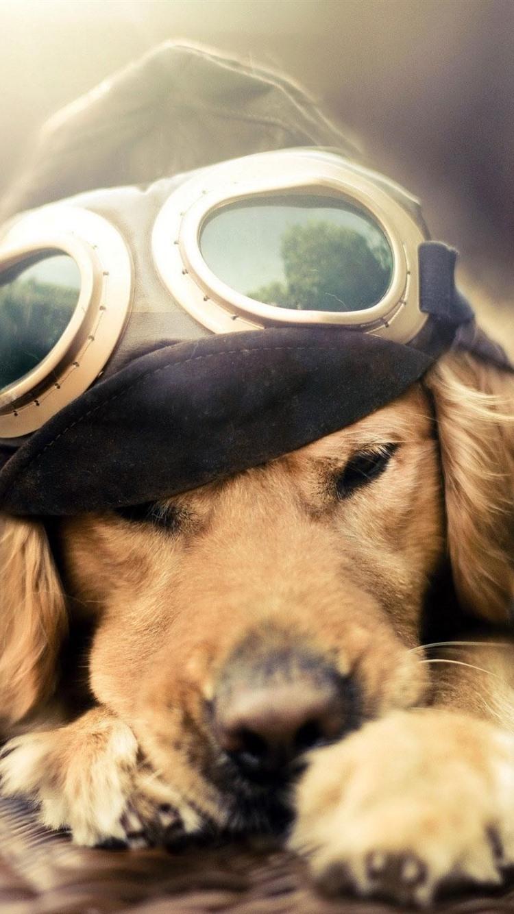 面白い犬 パイロット 飛行機 750x1334 Iphone 8 7 6 6s 壁紙 背景 画像