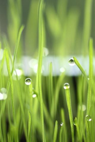 iPhone Wallpaper Green grass, dew, nature