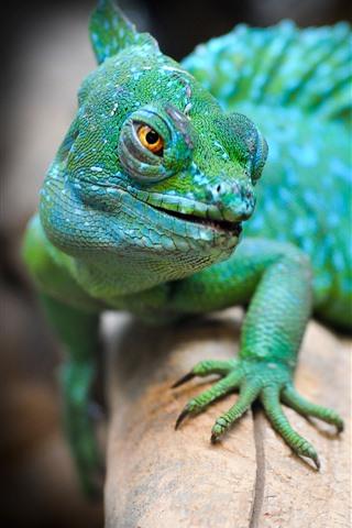 iPhone Wallpaper Green lizard, animal, hazy