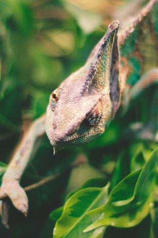 iPhone Wallpaper Iguana, reptile, lizard, green leaves, hazy