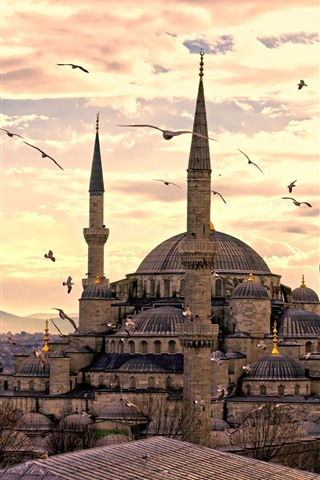 iPhone Wallpaper Istanbul, Turkey, mosque, seagull, dusk