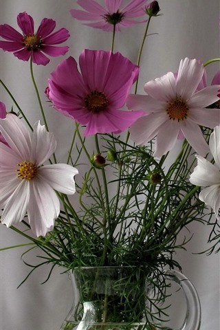 iPhone Wallpaper Kosmeya flowers, vase