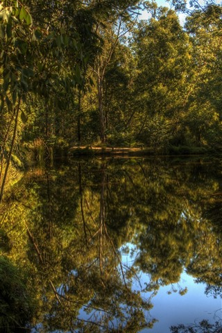 iPhone Wallpaper Lake, forest, trees, clear water, nature, reflection