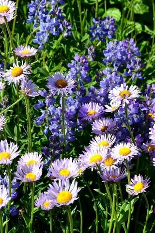 iPhone Wallpaper Pink and purple flowers, wildflowers