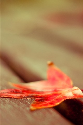 iPhone Wallpaper Red maple leaf, bench, hazy