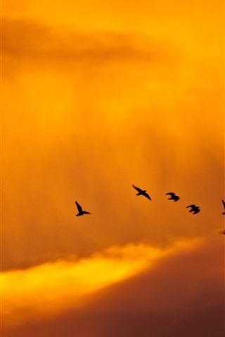 iPhone Wallpaper Sunset, birds, clouds, sky, orange color