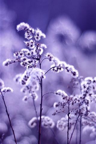iPhone Wallpaper Wildflowers, light purple style