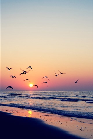 iPhone Wallpaper Birds flying in sky, sunset, beach, sea