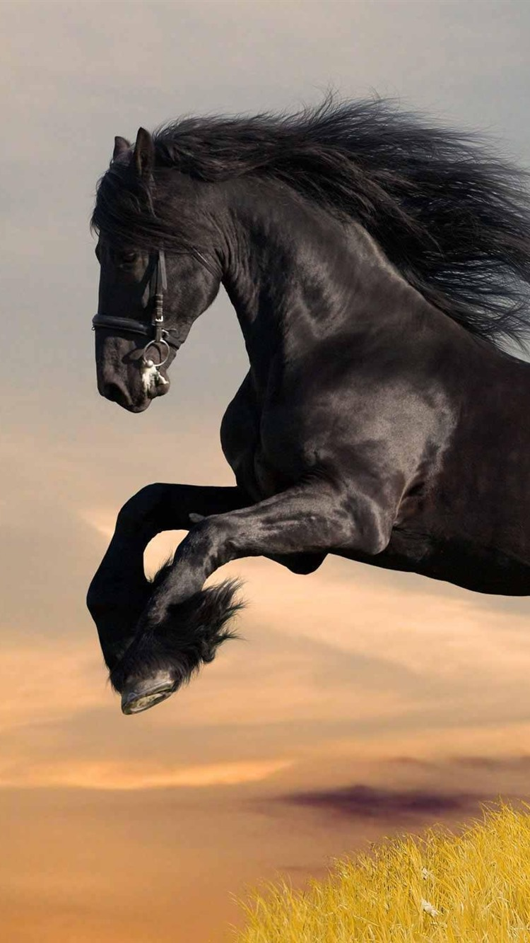 Wallpaper Black Horse Running Grass 2560x1600 Hd Picture Image