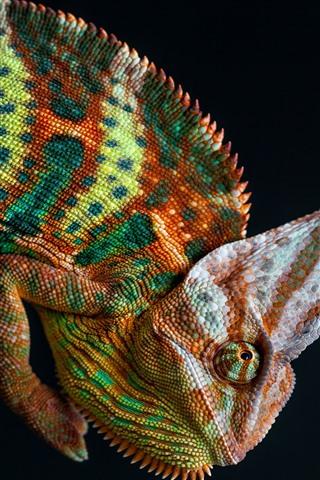 iPhone Wallpaper Chameleon, colorful, black background
