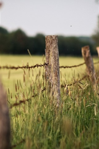 iPhone Wallpaper Fence, grass, hazy