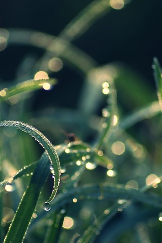 iPhone Wallpaper Grass leaves, green, dew, sun rays, morning