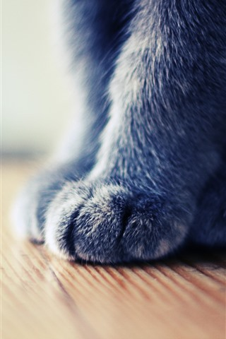 iPhone Wallpaper Gray cat paw macro photography