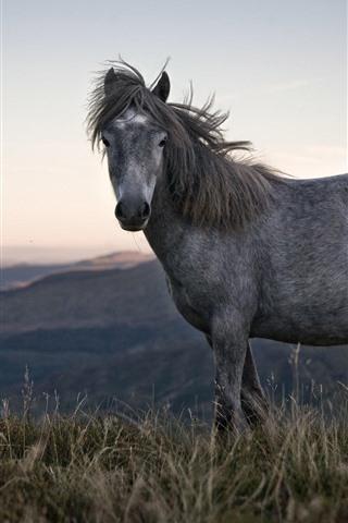 iPhone Wallpaper Gray horse, grass, mountains