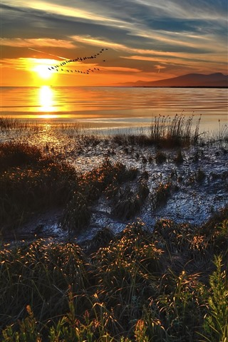 iPhone Wallpaper Lake, flight birds, sunset, grass, autumn