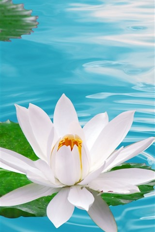 iPhone Wallpaper One white water lily flower, pond, water
