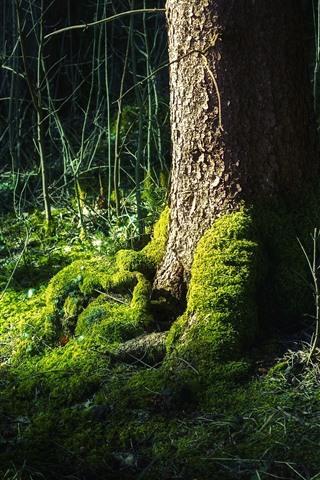 iPhone Wallpaper Tree, trunk, root, green moss, bushes