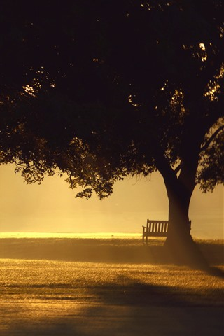 iPhone Wallpaper Trees, fog, bench, sunshine, morning, park