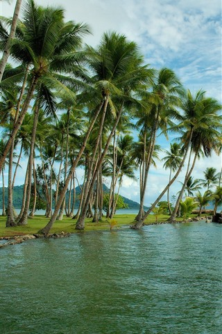 iPhone Wallpaper Tropical, sea, coast, palm trees, island, clouds