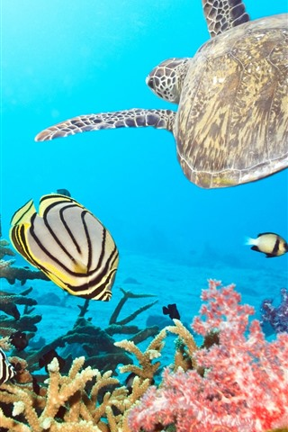 iPhone Wallpaper Turtle and fish, sea