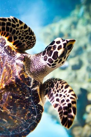 iPhone Wallpaper Turtle, underwater, swimming