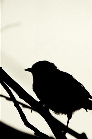 iPhone Wallpaper Bird, silhouette, sparrow