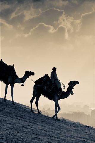 iPhone Wallpaper Camels, desert, Egypt