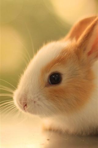 iPhone Wallpaper Cute furry rabbit, look, pet